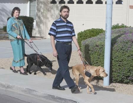 كلب الزلاقات ، أي الكلب الذي يستعمل